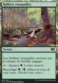 Halliers tranquilles -