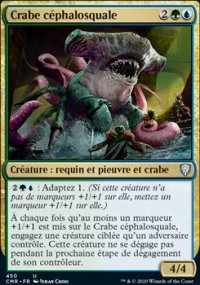 Crabe céphalosquale -