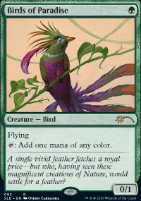Birds of Paradise -