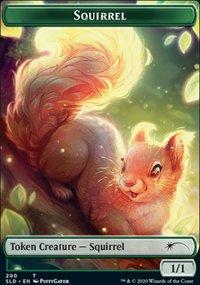 Squirrel -